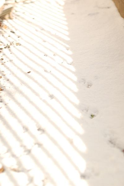 雪01.jpg